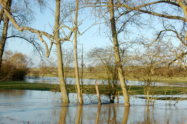 Trees beside the flooded River Leam east of Marton