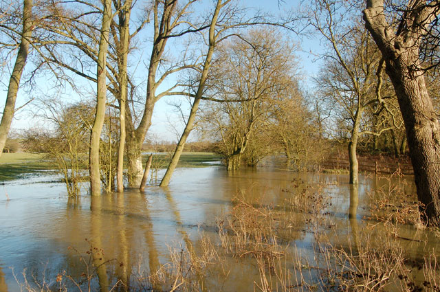 Flooded spinney beside the River Leam near Marton