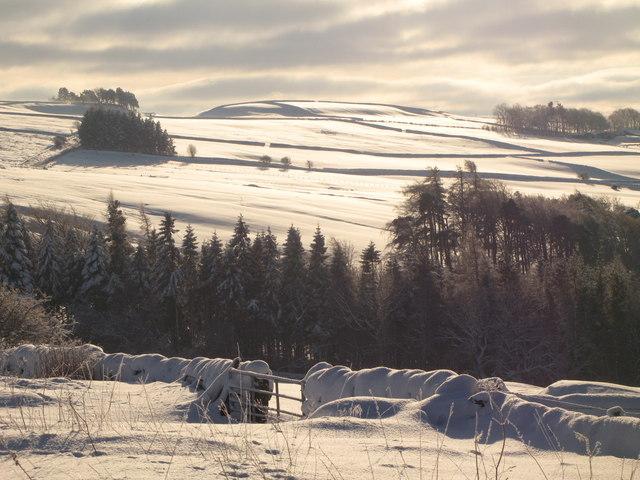 Snowy pastures around Parkgates Burn