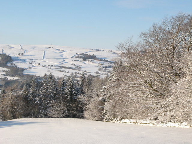 Snowy pastures and woodland near Park Gates Farm