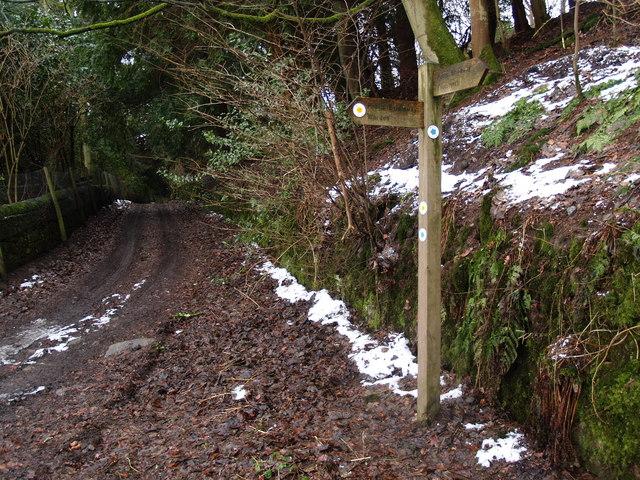 Bridleway Sign near High Warden