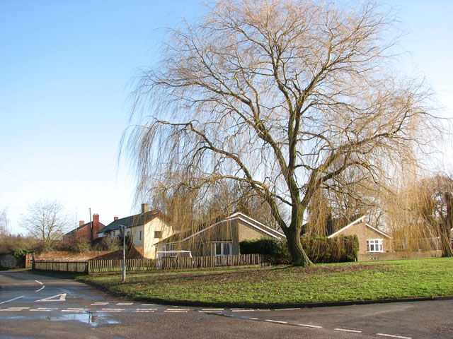 Willow tree by the junction of Vicarage Road and School Road