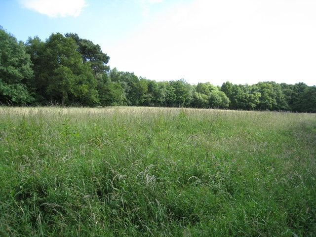 Grasslands & Lloyd's Copse