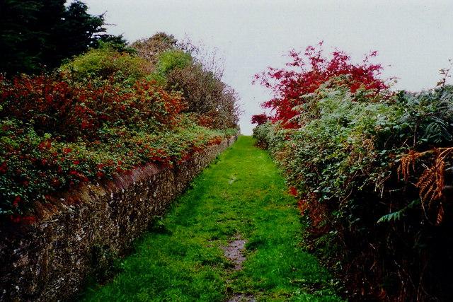 Port Erin - Bradda Head Nature Walk