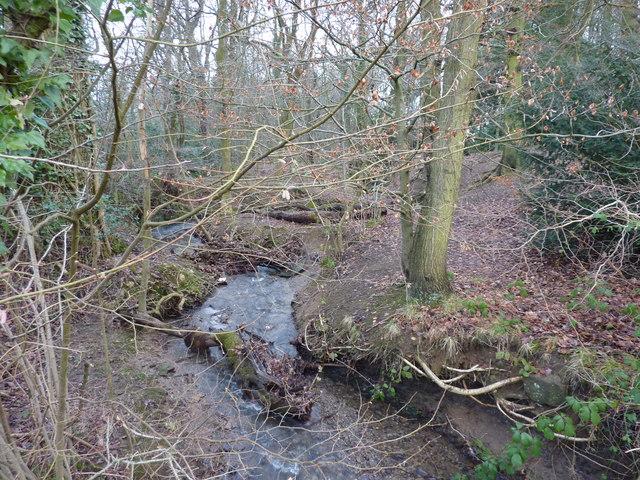 Birdholme Brook flowing through Walton Wood