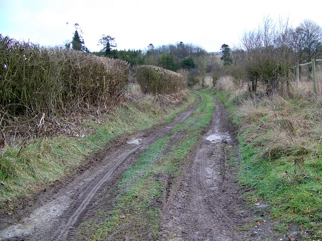 Byway near East Winterslow