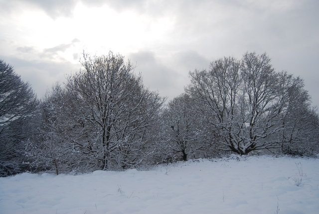 Wintery trees, Tunbridge Wells Common