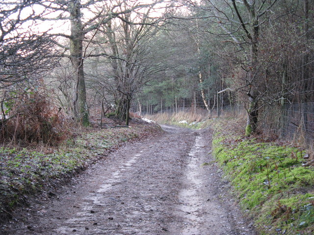 Bridleway alongside the Fir Plantation towards Redford House