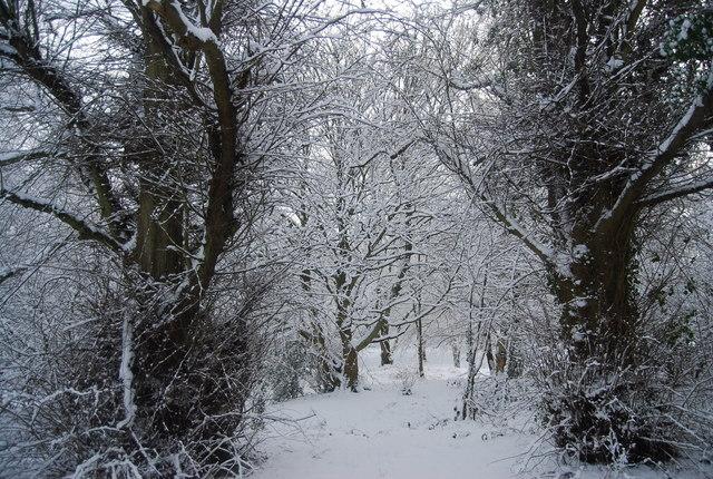 Snow scene in the trees, Tunbridge Wells Common