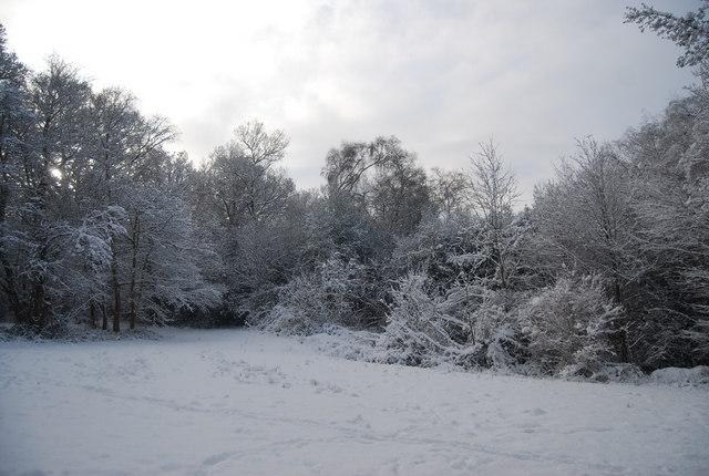 Tunbridge Wells Common in the snow
