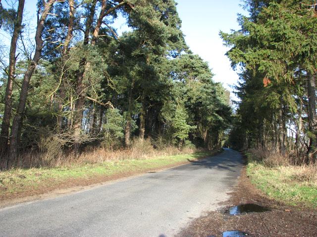 Approaching Russel's Plantation by Gooderstone Warren