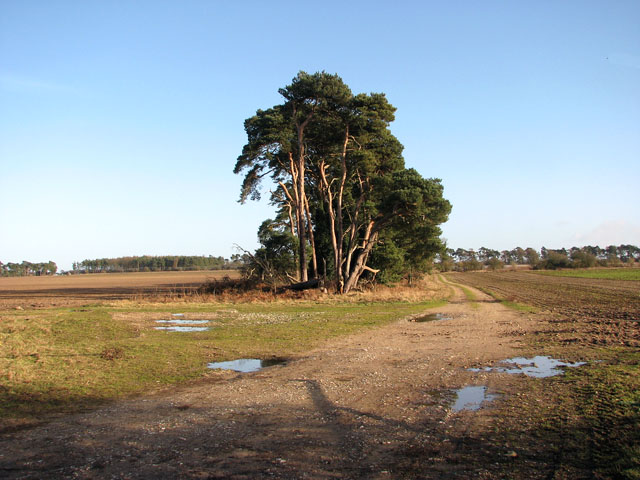 Track by Gooderstone Warren
