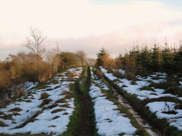 Track Through Plantation Land
