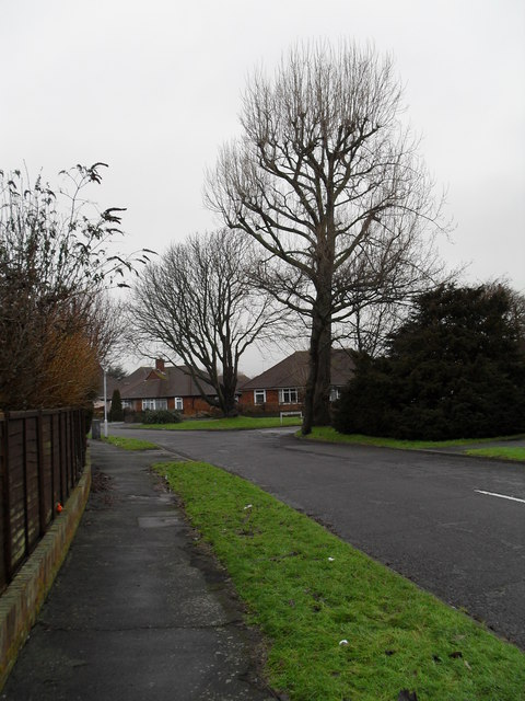 Winter trees in The Crescent