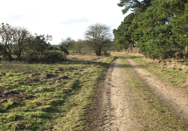 Farm track in Gooderstone Warren