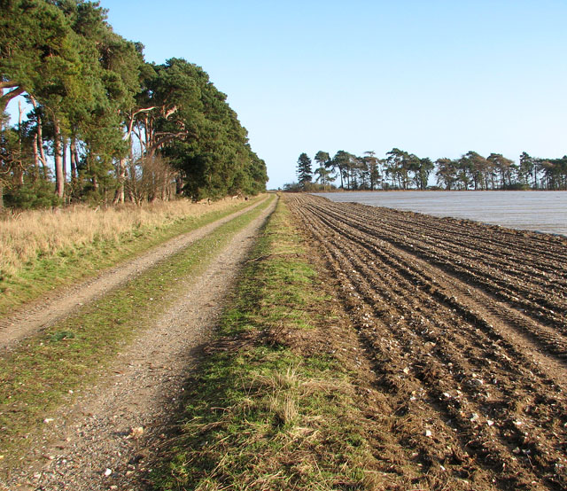 Track along a field's edge