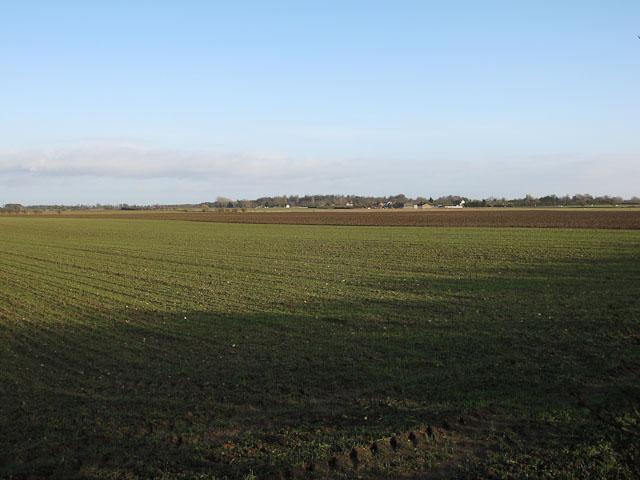 Isleham Field