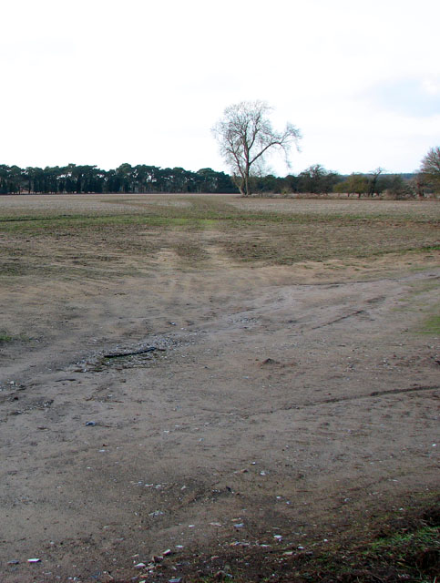 A bare tree in a bare field south of Cockley Cley