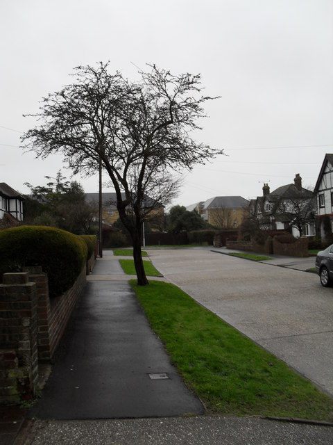 Winter trees in Hawley Road
