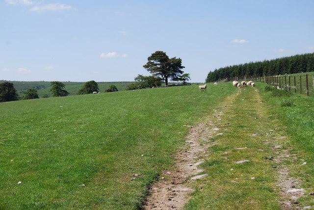"Extensive ""improved"" grassland"