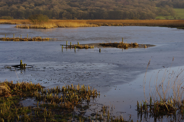 Leighton Moss in winter