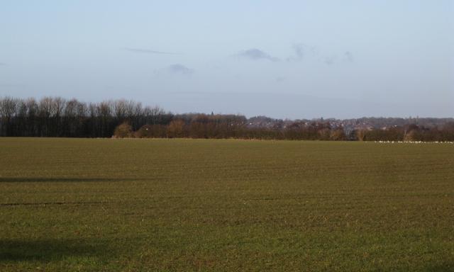 Corner of a field