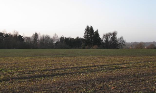 Corner of a plantation near Kenilworth Golf Course