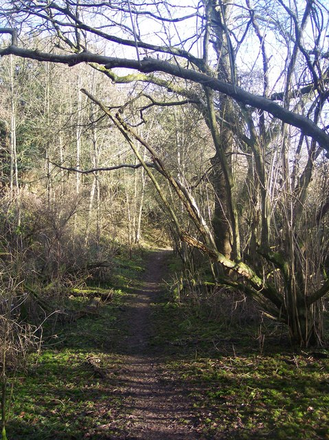 The North Downs Way in Deepdale Wood