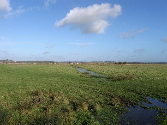 Trade Marsh