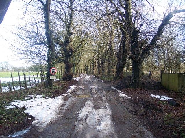 Chestnut Avenue enters Kent