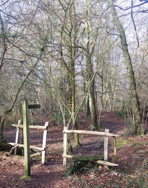 Footpath enters Park Wood