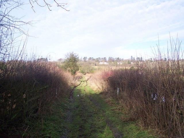 Rowtye Wood Byway