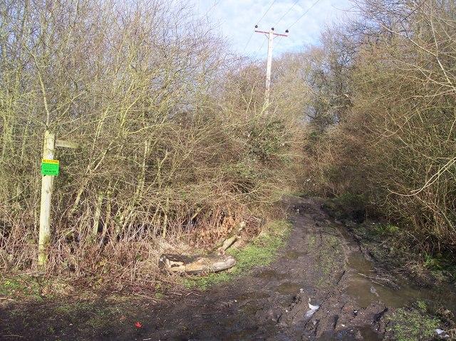 Byway through Rowtye Wood