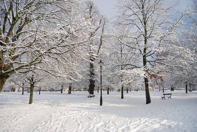 The Grove in the snow (1)