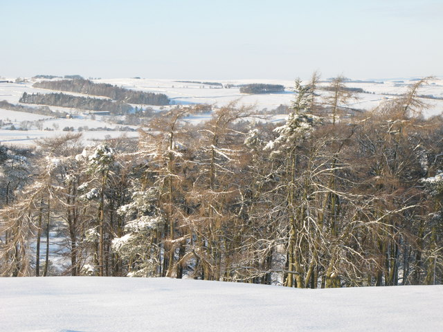 Snowy pastures and woodland west of Park Gates Farm