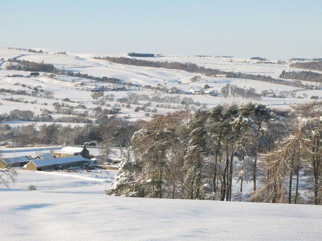 Snowy pastures and woodland above Studdon Park