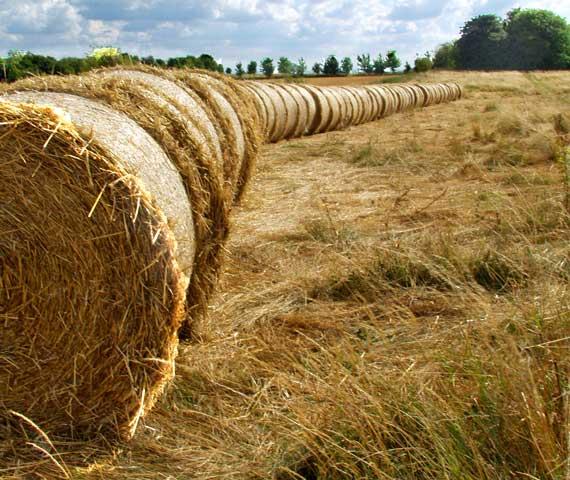 Straw bales at Calcot