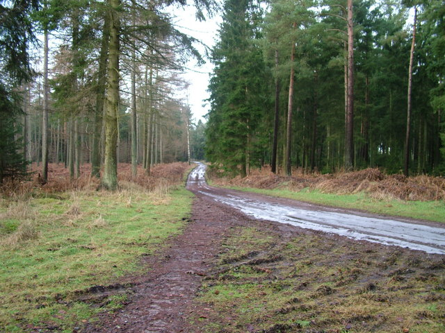 Track on Whinfell Forest