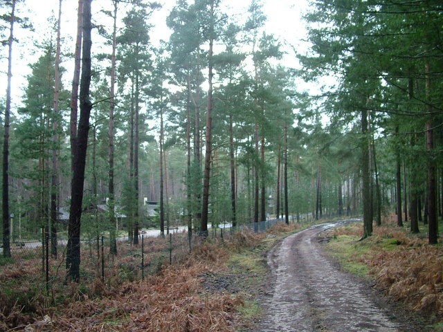 Forest track and fence outside Center Parcs