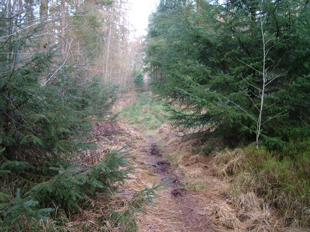 Woodland path, Whinfell Forest