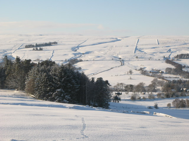 Snowy pastures and woodland south of Studdon Park