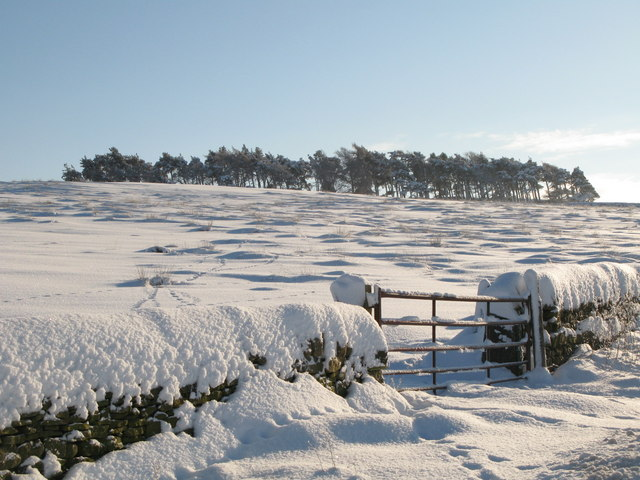 Rough pastures and plantation west of Green Hill in the snow