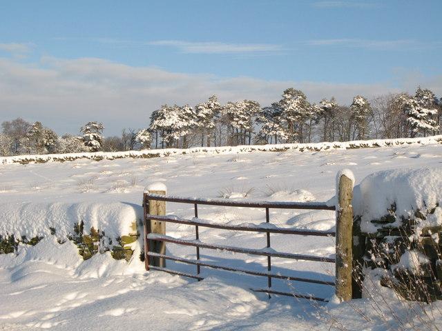 Snowy pastures and woodland near Park Gates Farm