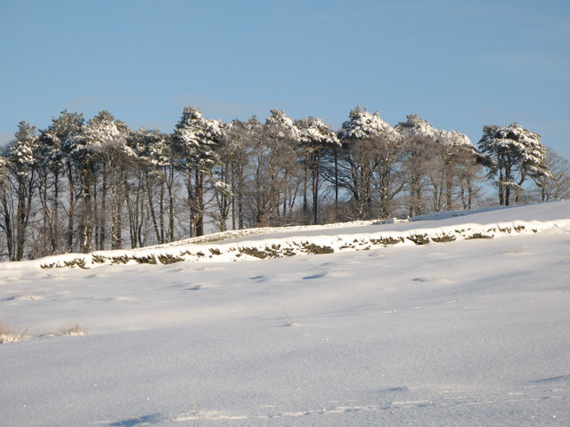 Snowy pastures and woodland near Park Gates Farm (2)