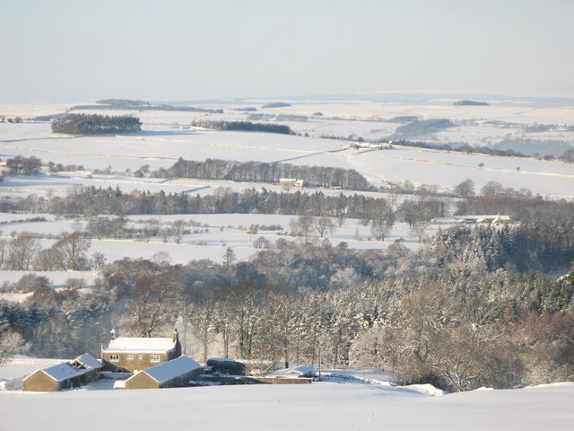 Snowy pastures and woodland around Studdon Park