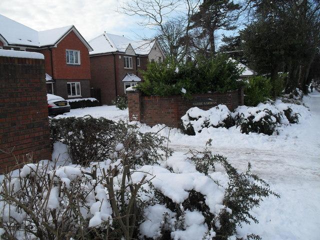 A snowy scene at Glebe Gardens