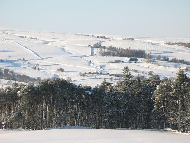 Snowy East Allen Dale west of Studdon Park (2)