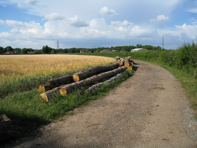 Timber from Boathouse copse