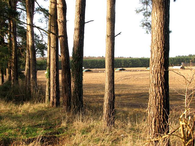 Stubble field north of Pine Avenue