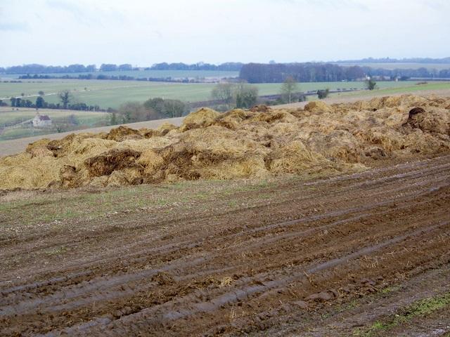 A gert heap of Wiltshire's finest, Fifield Bavant